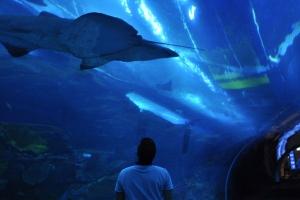 9_aquarium-dubai
