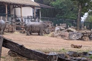 12-rhinoceros