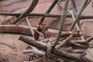 16-kangourou-et-bebe-poche