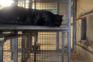 17-panthere-noire-dort