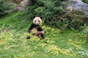 5-panda-zoo-beauva