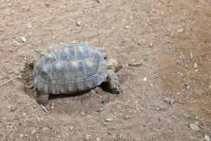 7-bebe-tortue
