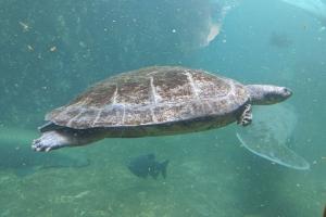 8-tortue-l-eau